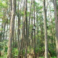 Tallahassee Tree to Tree Zip Line Adventures at the Tallahassee Museum